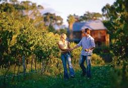 cruise throught the vineyards